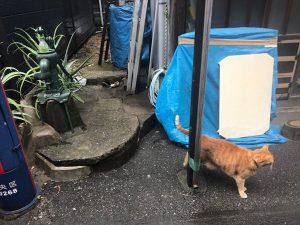 井戸とネコ