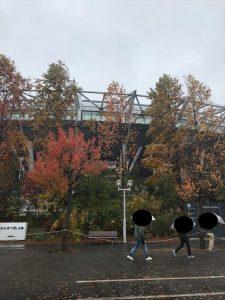 (写真6)スタジアム近辺は木々が色づきはじめ、とてもきれい